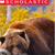 Scholastic Photo of Bear